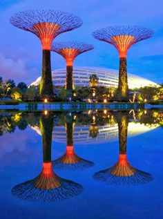 Supertree Grove and Gardens by The Bay, Singapore