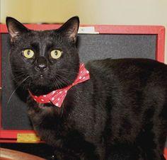 Treasury Cat Gladstone Thrilled To Serve Queen Elizabeth: Friendlier Than Larry and Palmerston