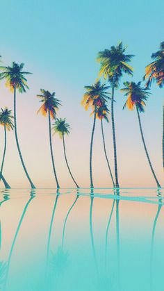 Ombre Palm trees iPhone wallpaper