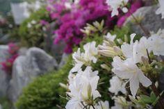 중동중학교에 핀 꽃. 이 꽃처럼 활짝피거라
