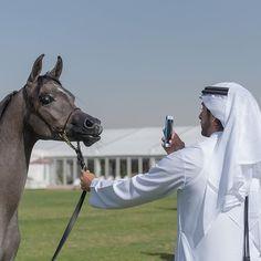 Monday, 11/01/2016  The Crown Prince of Dubai, His Highness Sheikh Hamdan bin Mohammed bin Rashid Al Maktoum take a photo of the horse ~~~~~~~~~~~~~~~~~~~~~~~~~~~~~~~~  repost from @maktoumz  #SheikhHamdan #HamdanMRM #HamdanBinMohammed #AlMaktoum #PrinceHamdan #CrownPrinceOfDubai #Fazza #Fazza3 #Faz3 #Dubai #UAE #UnitedArabEmirates #fansfazza3_indo #Indonesia #fansfazzaindonesia