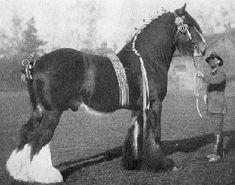 Любовь Лошадей, Породистые Лошади, Ломовая Лошадь, Винтажная Лошадь, Тяжеловозы, Импрессионизм, Лошадиные Породы, Животные