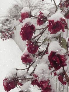 """gyclli: """" winter beauty °✶★° """""""