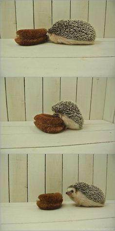 hello, friend...you...are not?? 友達かな?うーん・・・違うみたい。 |かわいい動物botさんのついっぷるトレンド画像