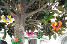 woolly flutterbys in tree