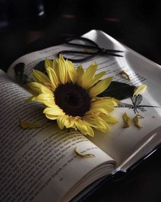 """soul-of-an-angel: """"©nonisadzi """" Tumblr Photography, Still Life Photography, Book Photography, Creative Photography, Sunflower Photography, Aesthetic Iphone Wallpaper, Aesthetic Wallpapers, Beautiful Flowers, Beautiful Pictures"""