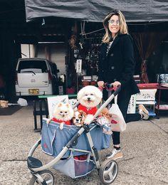 Momento fofura na sua timeline  Cachorrinhos japoneses fotogênicos são só sorrisos  Marquem as amigas que gostariam de passear com a cachorrada no carrinho! Haha!