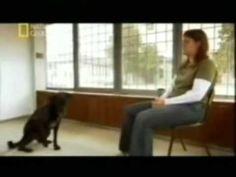 Documental inteligencia en los perros Youtube, Documentaries, Animals And Pets, Dogs