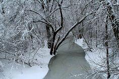 Root River by Debbie Nobile