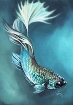 Image from http://img08.deviantart.net/3790/i/2013/183/2/4/betta_fish_by_daughterofthestars-d6botj8.png.
