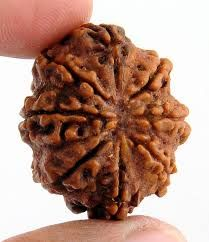 Eight Mukhi/8 Mukhi Nepali Rudraksha is a symbol of Lord Ganesha, the son of Lord Shiva. Ganesha is depicted in ancient scripture as Vighanharta, the lord of obstacle. He is worshipped to remove obstacle and sufferings of life. Eight Mukhi Rudraksha bestows a wearer with wisdom and the he becomes free from failure. Lord Ganesha removes the suffering and obstacle both of a material and spiritual order. Lord Ganesha is also considered as to be the Lord of letters and learning.