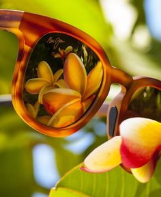 db625859b4cc Get ready to bloom in spring with Maui Jim tortoise sunglasses. Lentes De  Contacto,
