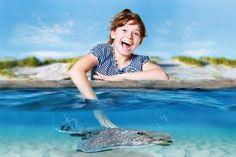 Das Andere Holland - Dolfinarium Harderwijk: Delfine, Seelöwen und spritziger Showspaß #Abenteur #Wasser #Spaß