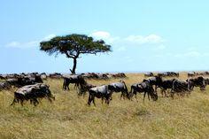 Afrika Reisen - Urlaubsheld | Dein Urlaubsportal