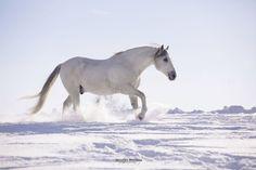 Pferde in der Natur - Monika Bogner Photography Horses In Snow, Black Horses, Andalusian Horse, Friesian Horse, Arabian Horses, Equine Photography, Animal Photography, Horse Wallpaper, Blue Roan