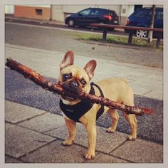 Carry a big stick!