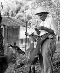 After a busy day at his hospital in Lambaréné, Dr. Schweitzer would allow the resident antelopes to lick his arms for the salt in his perspiration. Albert Schweitzer, Animal Society, National Museum, Vintage Images, Safari, Africa, Horses, Adventure, Period