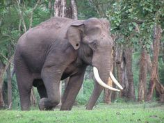 Panpatha Wildlife Sanctuary - in Madhya Pradesh, India