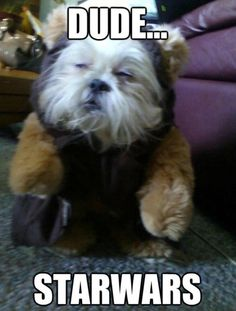 Funny pictures about He's A Mixture Of An Ewok And Chewy. Oh, and cool pics about He's A Mixture Of An Ewok And Chewy. Also, He's A Mixture Of An Ewok And Chewy photos. Funny Animal Pictures, Funny Animals, Cute Animals, Animal Pics, Animal Fun, Animal Captions, War Dogs, Star Wars, Dog Memes
