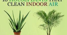 10 Houseplants That Clean Indoor Air.