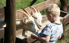 www.midlandsmeander.co.za Swissland Cheese has cheese tasting and tours where you can learn how the cheese is made. Pick a selection of your favourite cheese, ice cream, and dairy products to enjoy on the rolling lawns. Kids will love feeding the goats.