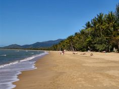 Palm Cove, honeymoon'd here Tasmania, Palm, Beach, Places, Water, Travel, Outdoor, Gripe Water, Outdoors
