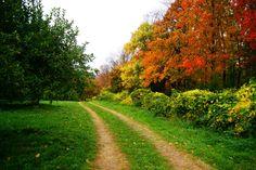 25 Northeast Fall!! I am in love! Warwick NY [2048X1369] (photogrph by Wilson Nawaz )