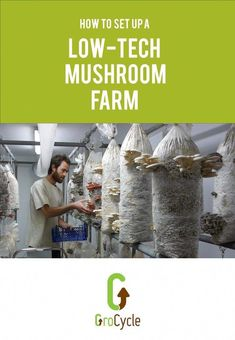 Learn the main steps to setting up a small scale low tech mushroom farm Growing Mushrooms At Home, Garden Mushrooms, Edible Mushrooms, Diy Tech, Cool Tech, Estilo High Tech, Sterile Processing Tech, Tech House Music, Tech Gifts For Men