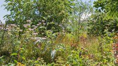 London Glades (Gardens for a Changing World); RHS Hampton Court Palace Flower Show 2017 Hampton Court Flower Show, Rhs Hampton Court, Annual Flowers, Chelsea Flower Show, Permaculture, Perennials, Garden Design, Summertime, Allotment