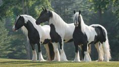 the three amigos..........magnificent.....