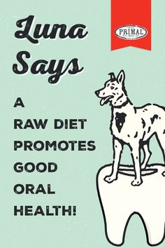 😁 The live enzymes in raw foods help maintain healthy flora in a pet's saliva, which promotes naturally clean teeth. Dental Health Month, Oral Health, Animal Nutrition, Pet Nutrition, Raw Pet Food, Understanding Emotions, Clean Teeth, Pet Dogs, Pets