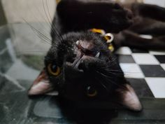Just a cute shot of my black cat. Taken using realme 8 Pro Pro Camera, My Black, Kitten, Photo And Video, Cats, Animals, Cute Kittens, Kitty, Gatos
