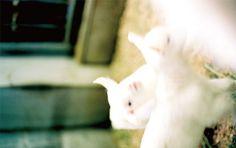 妙な《温かさ》を感じれる子ヤギ photo