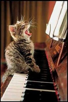 Lalala...What? Are you saying I can't sing? Ha, I sure can, see me! Online Studio Lessons 'PROJECT YOUR VOICE EASILY, CONFIDENTLY, JOYFULLY!' #SingingLessons #Piano lessons www.SungheeStepak.com