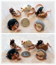 6 Tiny Rats ~ Crazy4ratties Commission by nEVEr-mor.deviantart.com on @deviantART Fimo Clay, Polymer Clay Animals, Polymer Clay Figures, Polymer Clay Miniatures, Polymer Clay Charms, Polymer Clay Creations, Polymer Clay Art, Clay Crafts, Polymer Clay Projects