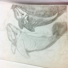 Sketching out ghostly whale skeletons. Whales have some pretty weird skulls.