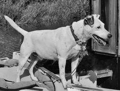 On Guard Dog