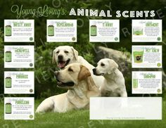 We hope you enjoy this Animal Scents flyer that is perfect for events, meetings, classes, and more. The flyer is designed to be 11″ width x 8.5″ height. It was designed with professiona…
