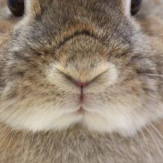 Bunny rabbit Funny Bunnies, Baby Bunnies, Like Animals, Animals And Pets, Bunny Book, Bunny Rabbit, All About Rabbits, Rabbit Tattoos, Blue Bunny