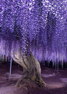 quiet-nymph: Photography by Purple Love, All Things Purple, Shades Of Purple, Beautiful World, Beautiful Gardens, Beautiful Flowers, Most Beautiful, Flower Landscape, Fantasy Landscape