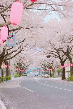 Sakura on a lantern-lined street of Japan Photo Japon, Japan Photo, Beautiful World, Beautiful Places, Beautiful Flowers, Sakura Cherry Blossom, Cherry Blossoms, Japan Street, Art Asiatique