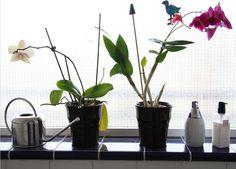 The 10 Best Plants for Your Bathroom Low Light Plants, Bathroom Windows, Light Bathroom, Best Bathroom Plants, Bathroom Lighting, Small Bathroom, Family Bathroom, Bathroom Ideas, Outdoor Gardens