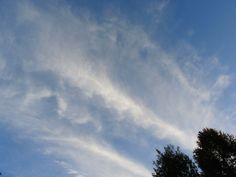 雲のアート Kiwi, Clouds, Outdoor, Outdoors, Outdoor Games, The Great Outdoors, Cloud