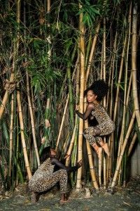 Houston City Dance Company Presents It's A Jungle Out There