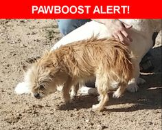 Please spread the word! Daisy was last seen in Albuquerque, NM 87121.  Description: Timid gentle but shy, her teeth are very crooked.   Nearest Address: 10523 Duke ave SW