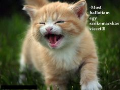 23 Adorable Kitties To Lick Your Troubles Away Kittens Cutest, Cute Cats, Funny Cats, Funny Animals, Cute Animals, Smiling Animals, Kittens And Puppies, Cats And Kittens, Crazy Cat Lady