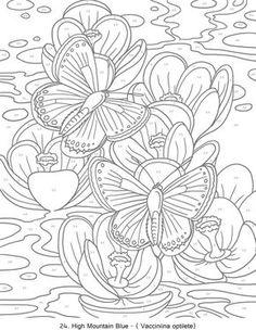 Creative Haven Butterflies Color by Number Coloring Book - Butterfly Papillon Mariposas Vlinders Wings Graceful Amazing Coloring pages colouring adult detailed advanced printable Kleuren voor volwassenen coloriage pour adulte anti-stress kleurplaat voor volwassenen Line Art Black and White