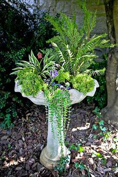 If you have an old birdbath that's had its day, transform it into a mini garden. We provide a list of plant suggestions and landscape tips for this cr… - Alles über den Garten Bird Bath Planter, Bird Bath Garden, Garden Cottage, Garden Birds, Planters, Fairy Garden Pots, Planter Ideas, Diy Garden Projects, Garden Crafts