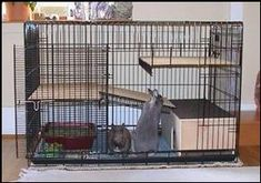 Cages A cage is a dedicated space for your rabbit. It will allow him to have his own territory and also provide you a spot to contain him to. Cages closely relate to the dens that a female rabbit w… Bunny Cages, Rabbit Cages, Dog Cages, House Rabbit, Dutch Rabbits, Pet Bunny Rabbits, Bunnies, Indoor Bunny House, Indoor Rabbit Cage