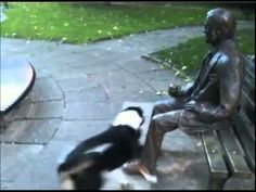 Funny Dog Playing with a Statue